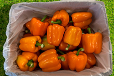 Peppers in PerfoTec LinerBag