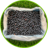 Blueberries in PerfoTec LinerBag