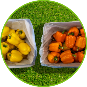 Yellow and orange bell peppers in PerfoTec LinerBag