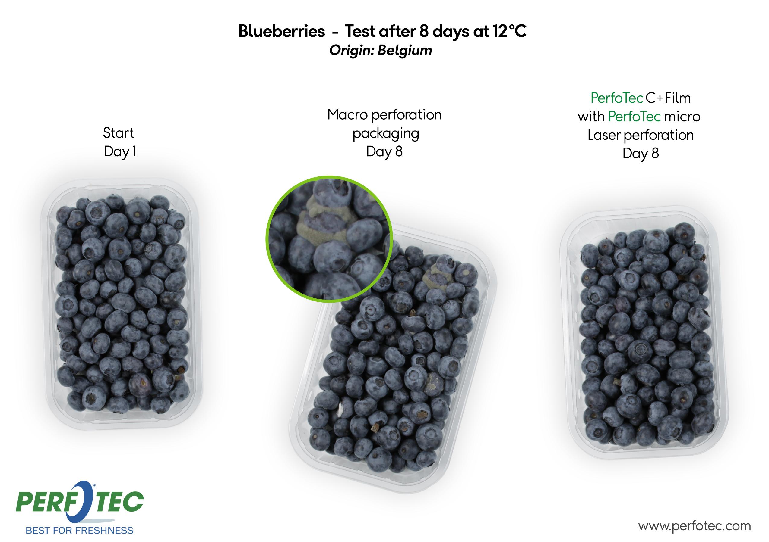 PerfoTec C+ Film trial with Blueberries