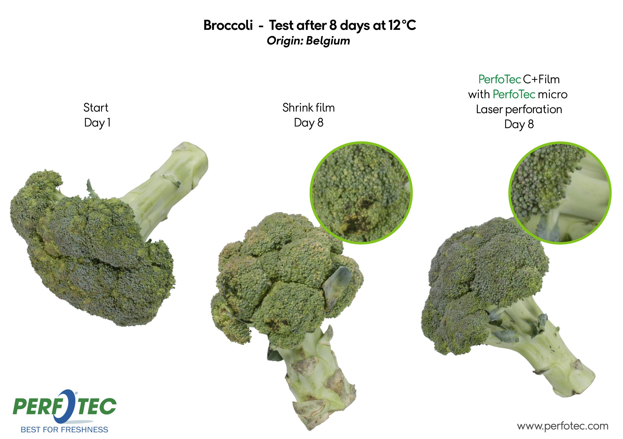 Broccoli in PerfoTec C+ Film